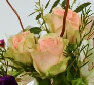 Chablis peach spray rose