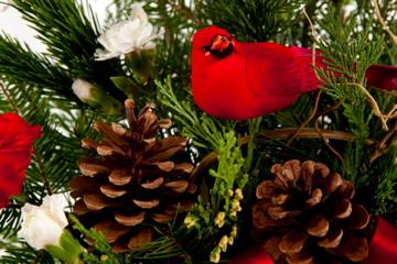 fresh cut fir and cardinal indianapolis