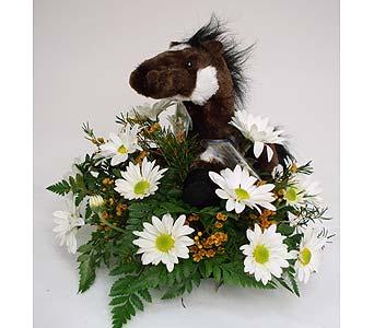 Pinto webkinz bouquet