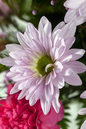 Sunshine flowers in Avon, IN