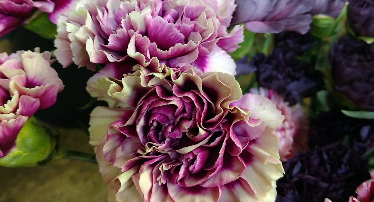 Fallflowers_carnations