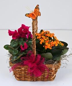 bloombasket.jpg