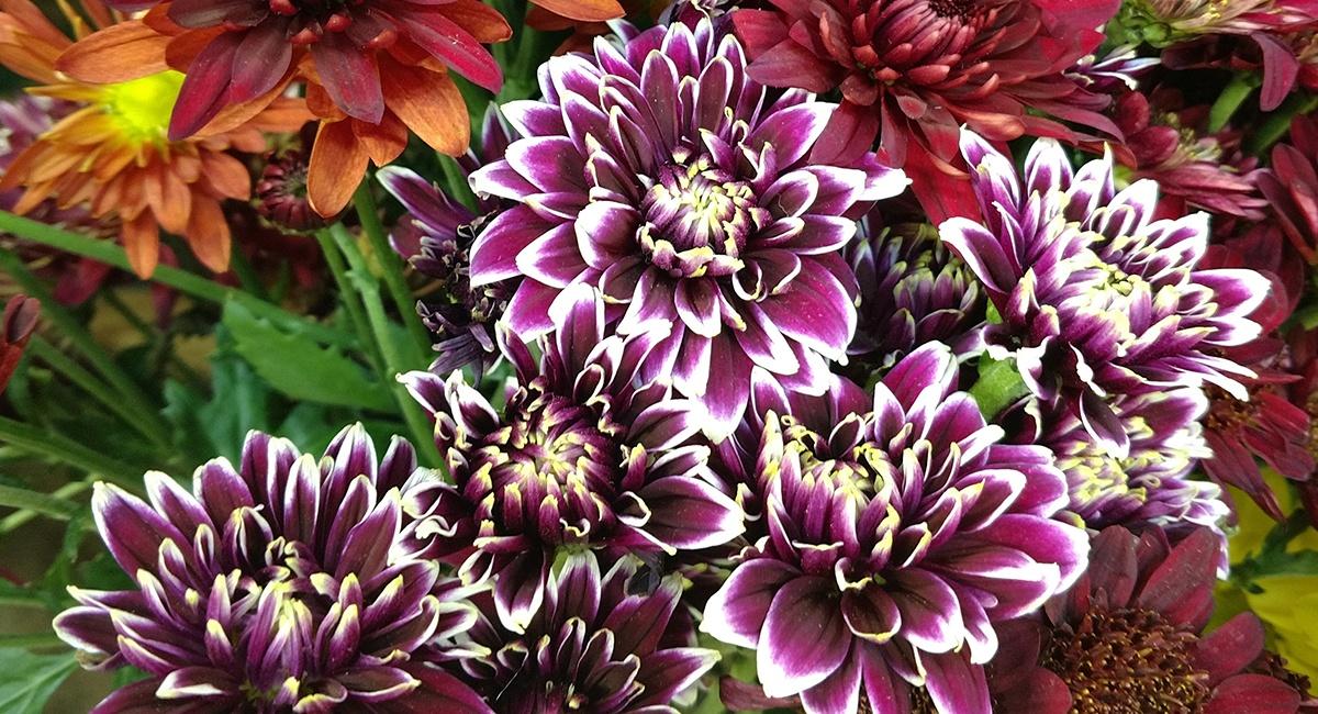 fallflowers_fallmums
