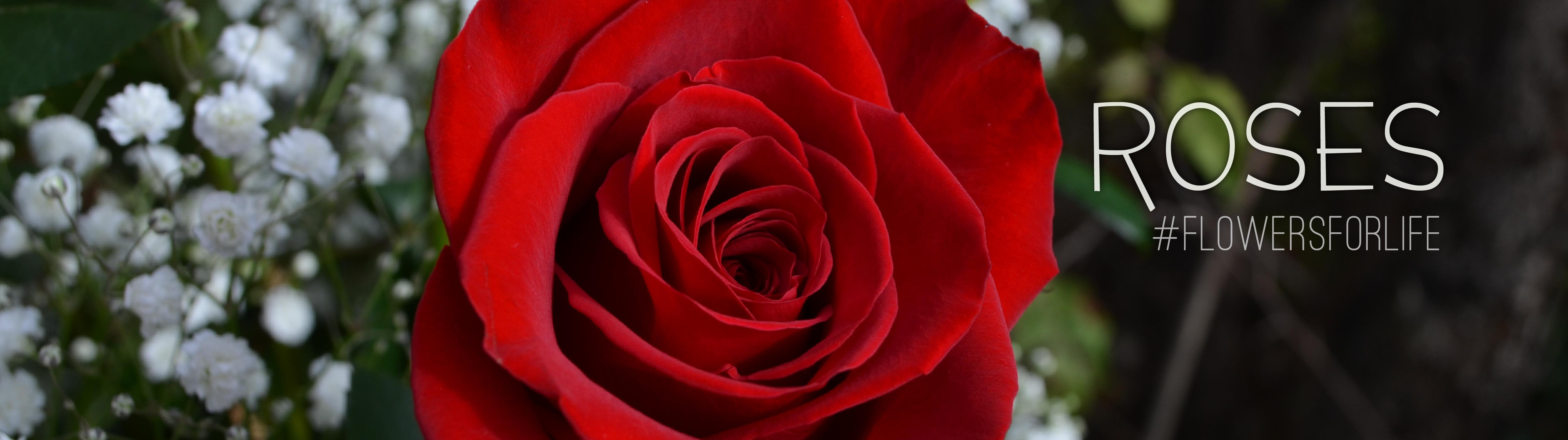 website_Slides_2017_Roses